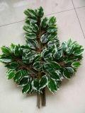 Piante e fiori artificiali del Ficus verde Gu-Jy902121431