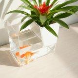 Serbatoio di pesci trasparente creativo di prezzi diretti della fabbrica di Qcy con il vaso di fiore