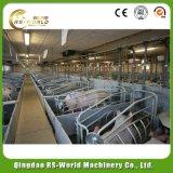 Het Werpen van het Varken van de varkensfokkerij Apparatuur Gegalvaniseerde Kratten voor Verkoop