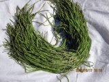 La jalea de montaña, Gongcai vegetales (010)