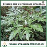 10:1 van het Uittreksel van het Poeder van het Blad van Brassaiopsis Glomerulata van het Kruid van de Oorsprong van China het Gehele voor Geneesmiddelen