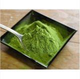Squisito e Caldo-Vendendo la polvere fresca organica del tè verde di Matcha