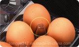 PVC는 6개의 계란 물집 포장 상자를 지운다