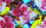 수영복 나일론 직물 (ASQ091)가 꽃 인쇄에 의하여 높 기지개한다
