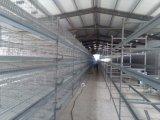 Xinguang está projetando o equipamento de frango