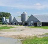 Structure métallique pour la Chambre de poulet à rôtir de Chambre de volaille/ferme de Chickend