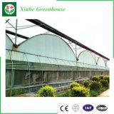 Estufa do policarbonato de Economicaltype para a plantação da agricultura de Morden