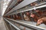 層(卵)の鶏はシステム装置をおりに入れる