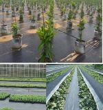 Stuoia del Weed tessuta polipropilene di controllo di Weed del giardino