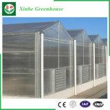 Invernadero hueco y sólido de la buena del precio del jardín PC del policarbonato de la hoja en venta