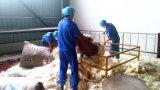 RDS China Fabriek/Fabrikant 5/95 Beneden/Veer 5% Gewassen Witte Eend neer
