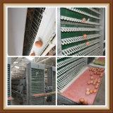 Couche de feux de croisement galvanisé à chaud du système de la cage de poulet et de la volaille l'équipement agricole