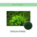 Fabricant de la nutrition Food / Feed Spiruline poudre organique