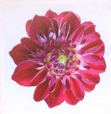 De hete Druk van het Canvas van de Bloemen van de Verkoop Mooie voor de Decoratie van het Huis