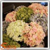 Hot Sale de casamento de alta qualidade de flores de seda artificial