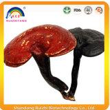 Reishi 버섯 추출 포자 기름 Ganoderma Lucidum 포자 Softgel