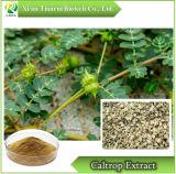 100% natürlicher Caltrop Auszug/Rebe Caltrop Frucht Auszug/Tribuloside