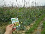 Mejora de suelo de Unigrow en cualquie establecimiento vegetal