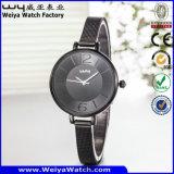 주문 로고 시계 ODM 사업 합금 가죽 시계 (WY-135C)