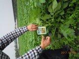 Engrais organique Unigrow microbienne sur la plantation de pommes de terre organique