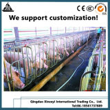 Оцинкованные трубы Farrowing ящиков Pig ограждения на заводе