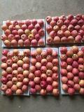 Frischer FUJI Apple mit gutem Preis und Qualität