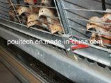 販売の若めんどりのケージシステム(Hフレーム)の農夫のための養鶏場の若めんどり電池か自動ケージ