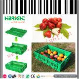 Groente en Fruit die Plastic Kratten vouwen