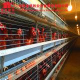 مصنع تصميم آليّة [بوولتري فرم] بطارية دجاجة قفص لأنّ طبقة/دجاجة/بيضة دجاجة