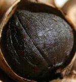 Vegaetable schwarzer Knoblauch vom frischen Knoblauch