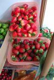 Plantas e flores artificiais das frutas artificiais Gu-Jy601155449
