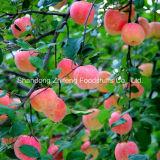 2015 de Nieuwe Appel van het Feest van het Fruit Verse