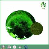 Extracto de la Chlorella de la Pérdida de Peso: Proteína el 60%, Carotenoides el 2%, Clorofila el 3%