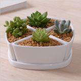 Base circolare con il grande Flowerpot di ceramica bianco
