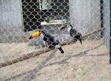 Het duurzame & Langdurige Opleveren van het Vogelhuis van het Roestvrij staal