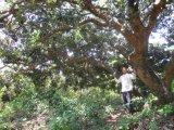 De Bio Organische Meststof van Unigrow voor het Planten Lichi en Longan