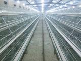 Le vieux poulet de jour met en cage le matériel à vendre (un type le bâti)