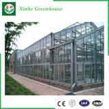 Serre chaude en verre avec la structure métallique galvanisée à chaud pour horticulture
