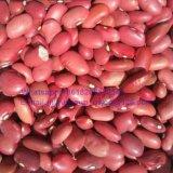 食品等級の赤い腎臓豆