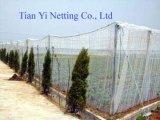 Anti rete ad alta resistenza del vento (AN120W)