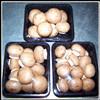 Свежий гриб Portabella