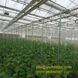 Ausgeglichenes PVC/PE Film-Gewächshaus für Gemüseplantage