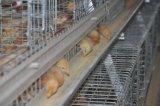 フレームの若めんどりの鶏のケージシステム