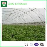 野菜栽培のための単一のスパンのプラスチックフィルムの農業のトンネルの温室