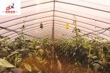 꽃 성장하고 있는 안쪽 온실