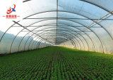 채소 재배자를 위한 단 하나 경간 갱도 온실