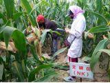 Ácido aminado Humic com fertilizante orgânico de NPK
