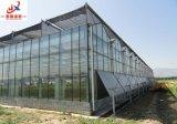 Serre chaude intelligente en verre de culture de légumes Venlo