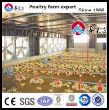 Système automatique en gros d'alimentation de la volaille pour le grilleur dans la ferme de poulet