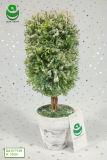 (0.2-0.3) Piante artificiali materiali del PE verde dei bonsai di m.